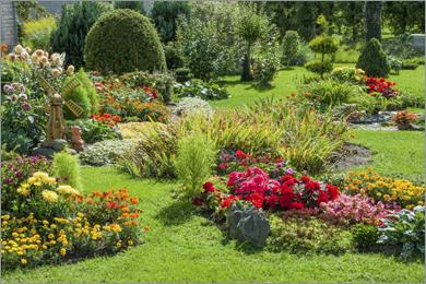Pflanzen Herkules Bau Garten Markt